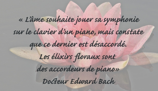 citation-bach